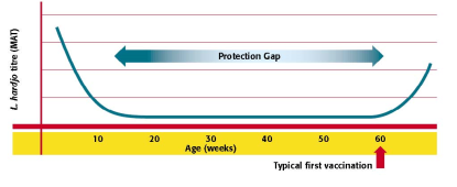 Lepto protection gap