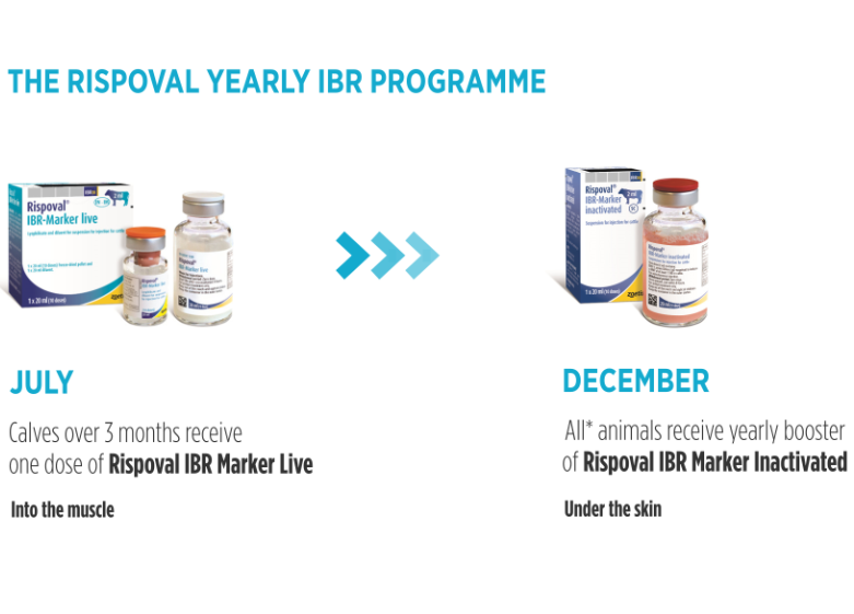 Rispoval IBR Yealry programme